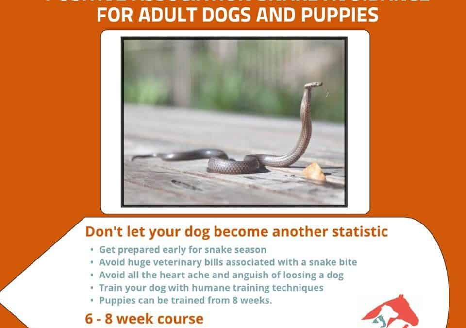 Check these guys out to teach your dogs to avoid snakes